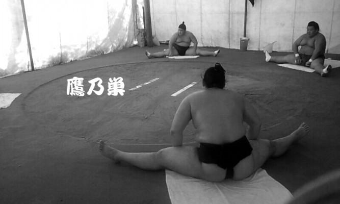 お相撲さんもカイロプラクティックでケアしています