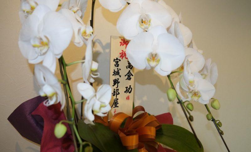 日本相撲協会「宮城野部屋」からタカノスカイロプラクティック開業を祝う胡蝶蘭を頂戴しました