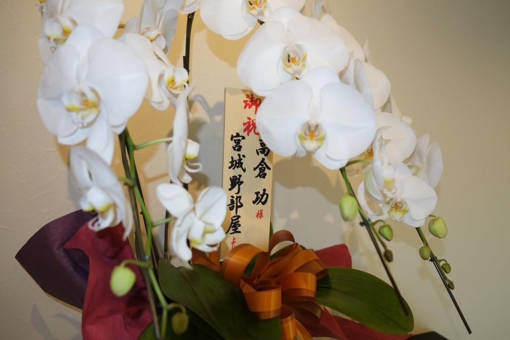 日本相撲協会「宮城野部屋」から整体タカノスカイロプラクティック開業を祝う胡蝶蘭を頂戴しました