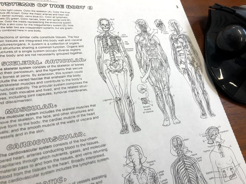 人体を構成する系統