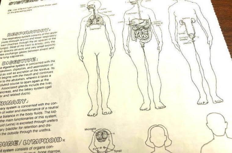 人体の構成するシステム