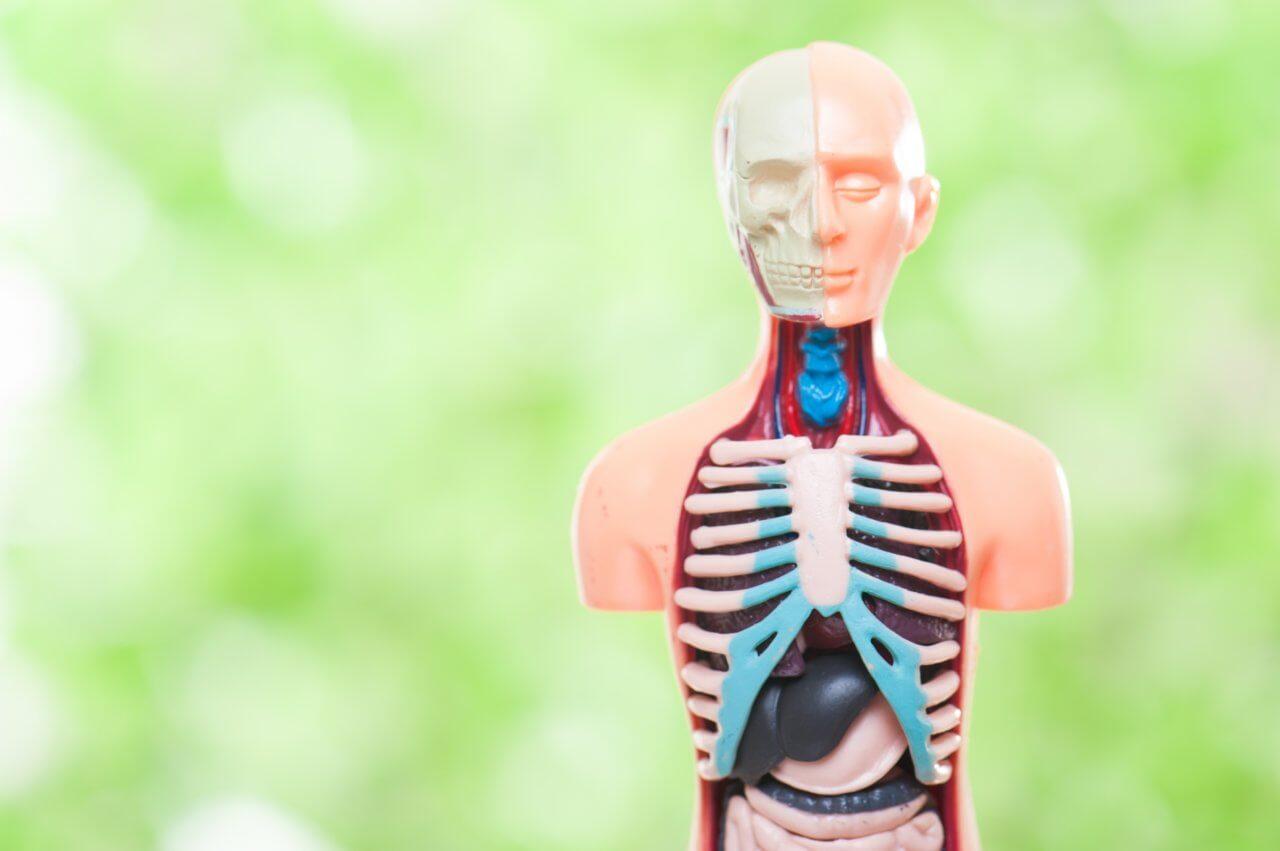 人体の解剖生理学